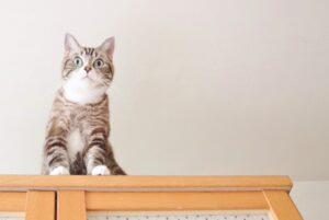 棚の上に座る猫